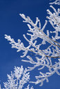 Frozen branches Stock Photos