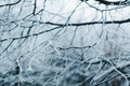 Frozen branches Stock Images