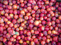 Frozen cherry apple is sold in north east china in winter Royalty Free Stock Photos