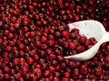 Frozen Cranberries on the foodshop Royalty Free Stock Photos