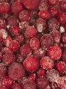Frozen cranberry background Stock Photography