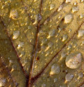 Frozen dew drops on fall leaf Royalty Free Stock Image