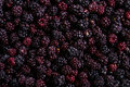 Frozen domestic wild blackberries background texture the singular blackberry genus rubus subgenus eubatus also called bramble or Royalty Free Stock Photos