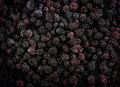 Frozen domestic wild blackberries background texture the singular blackberry genus rubus subgenus eubatus also called bramble or Stock Photo
