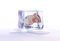 Frozen euro assets banknote inside an ice cube Stock Photography