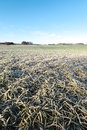 Frozen field. Royalty Free Stock Photo