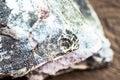 Frozen flounder head closeup top view Royalty Free Stock Photos