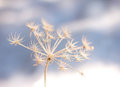Frozen flower in winter coldness seasonal background Stock Image