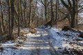 Frozen Forest's Path In T...