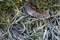 Frozen grass detail in winter time Stock Photography