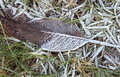 Frozen grass and leaf detail in winter time Stock Images