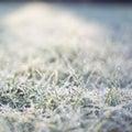 Frozen Grass. Nature In Winter.