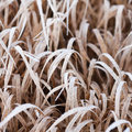 Frozen grass in winter forest Stock Images