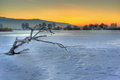 Frozen lake a with a dead tree in it captured in winter sunset time Stock Images