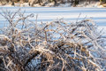 Frozen lake ice covered tree branches and snow in wintertime after freezing rain and storm winter foliage snow in Royalty Free Stock Image