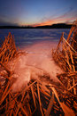 Frozen lake with reeds on the shore with snow. Royalty Free Stock Images