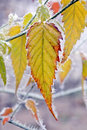 Frozen leaf Royalty Free Stock Photos