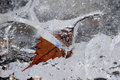 A frozen leaf in ice Royalty Free Stock Photo