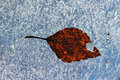 A frozen leaf on ice Stock Photos
