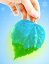 Frozen leave and hand Royalty Free Stock Photos