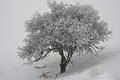 Frozen lonelyness Royalty Free Stock Photo