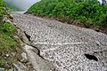 Frozen mountain stream in the Valley of Flowers, Uttarkhand, India Royalty Free Stock Photo
