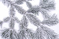 Frozen pine branch on white background Stock Image
