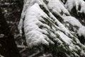 Frozen pine tree Royalty Free Stock Photo