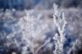 Frozen plant. Royalty Free Stock Photo