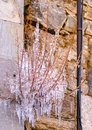 Frozen plant on a house at kosmas village at southern peloponnese in greece Royalty Free Stock Images