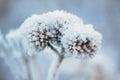 Frozen plant Royalty Free Stock Photo
