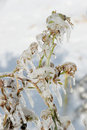 Frozen plants Royalty Free Stock Image