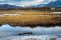 Frozen Pond Duck Geese