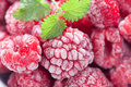 Frozen Raspberry Royalty Free Stock Photo