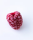 Frozen raspberry Stock Photography