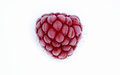 Frozen raspberry Stock Image