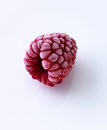 Frozen raspberry Stock Images
