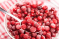 Frozen red cranberry on spoon Stock Images