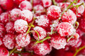 Frozen red currant berries closeup Royalty Free Stock Photos
