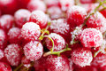 Frozen red currant berries closeup Royalty Free Stock Image