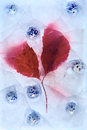 Frozen red leaf and bowl Royalty Free Stock Image