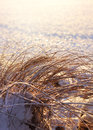 Frozen reeds winter season concept and hays cold Stock Photo