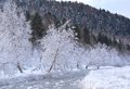 Frozen river and tree covered with snow Royalty Free Stock Photo