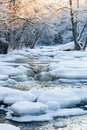 Frozen river in woods Royalty Free Stock Photo