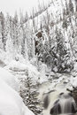 Frozen river in Yellowstone National Park during Winter Royalty Free Stock Photo