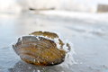 Frozen seashell on the lake in winter Stock Image