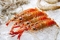 Frozen shrimp Royalty Free Stock Photo