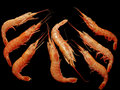 Frozen shrimps on black. Royalty Free Stock Photos