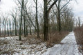 Frozen snowy way in the winter forest ukraine Royalty Free Stock Photography