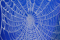 Frozen spider web Royalty Free Stock Image